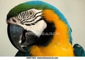 The Polly